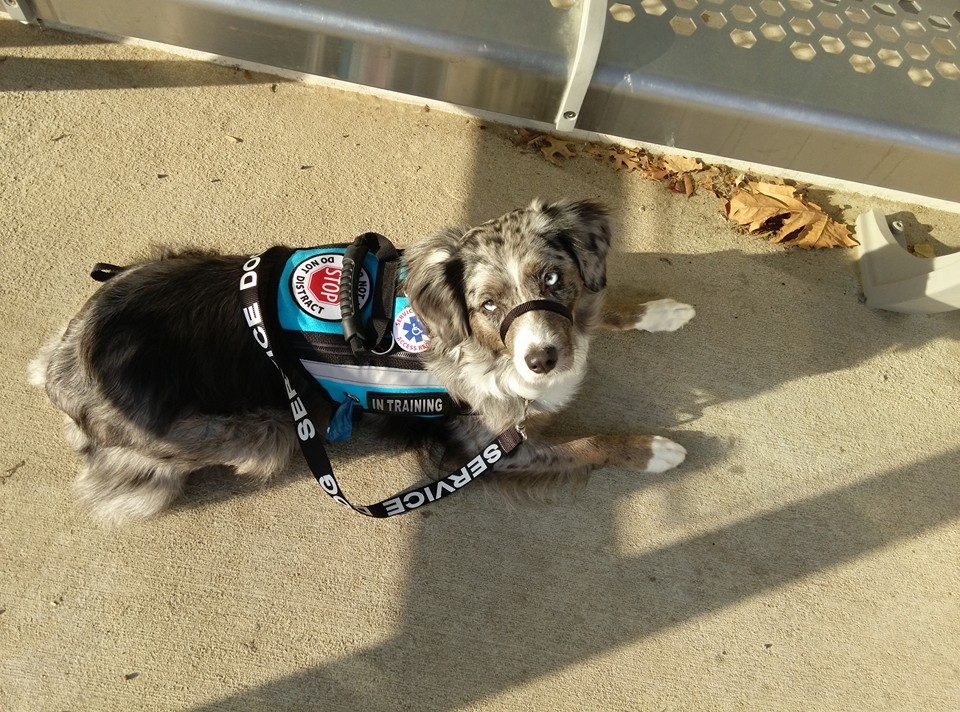 Service Dog Archives Jurist Commentary Legal News Commentary