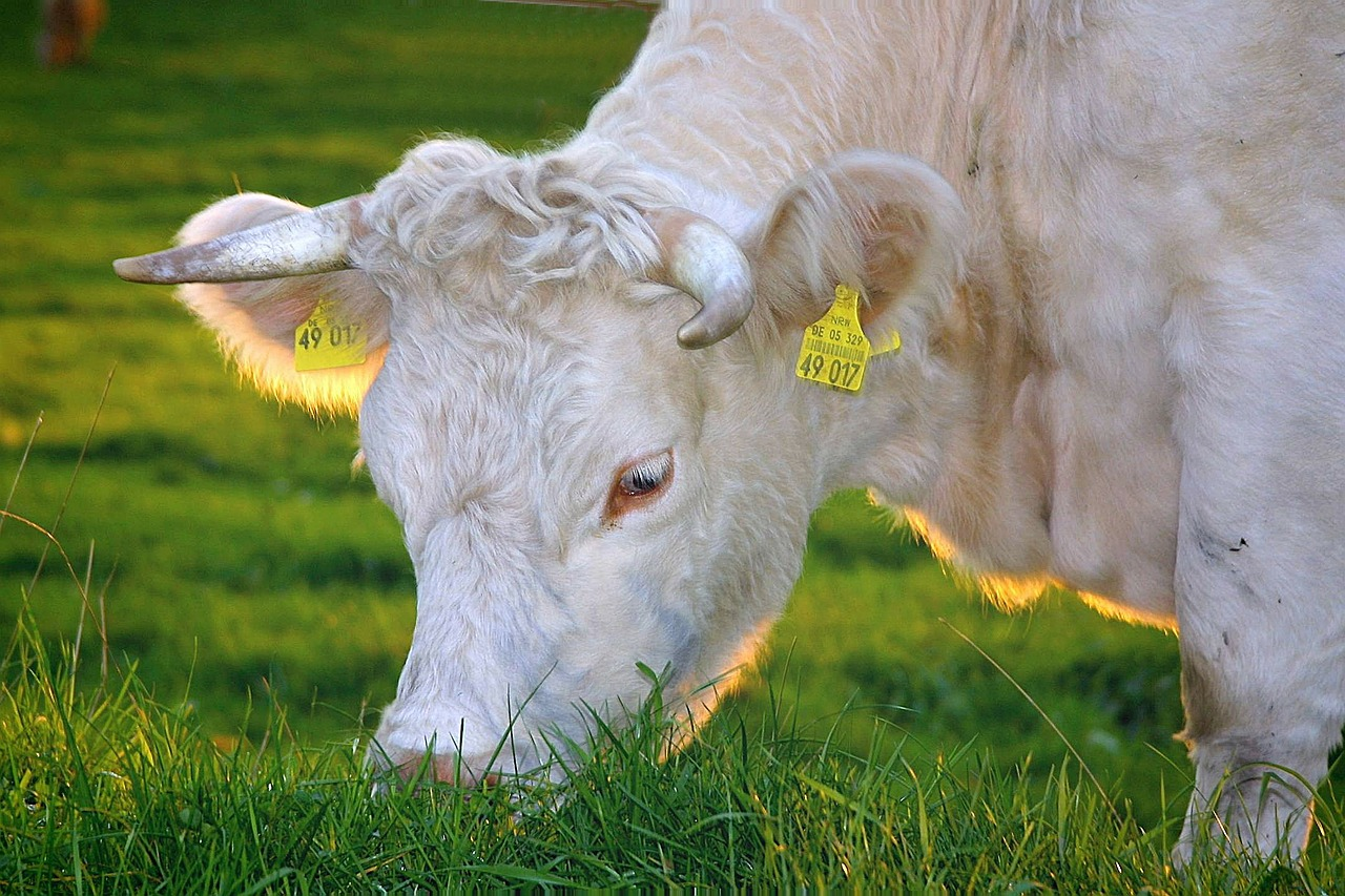 Brexit and Animal Welfare: Opportunity or Risk?