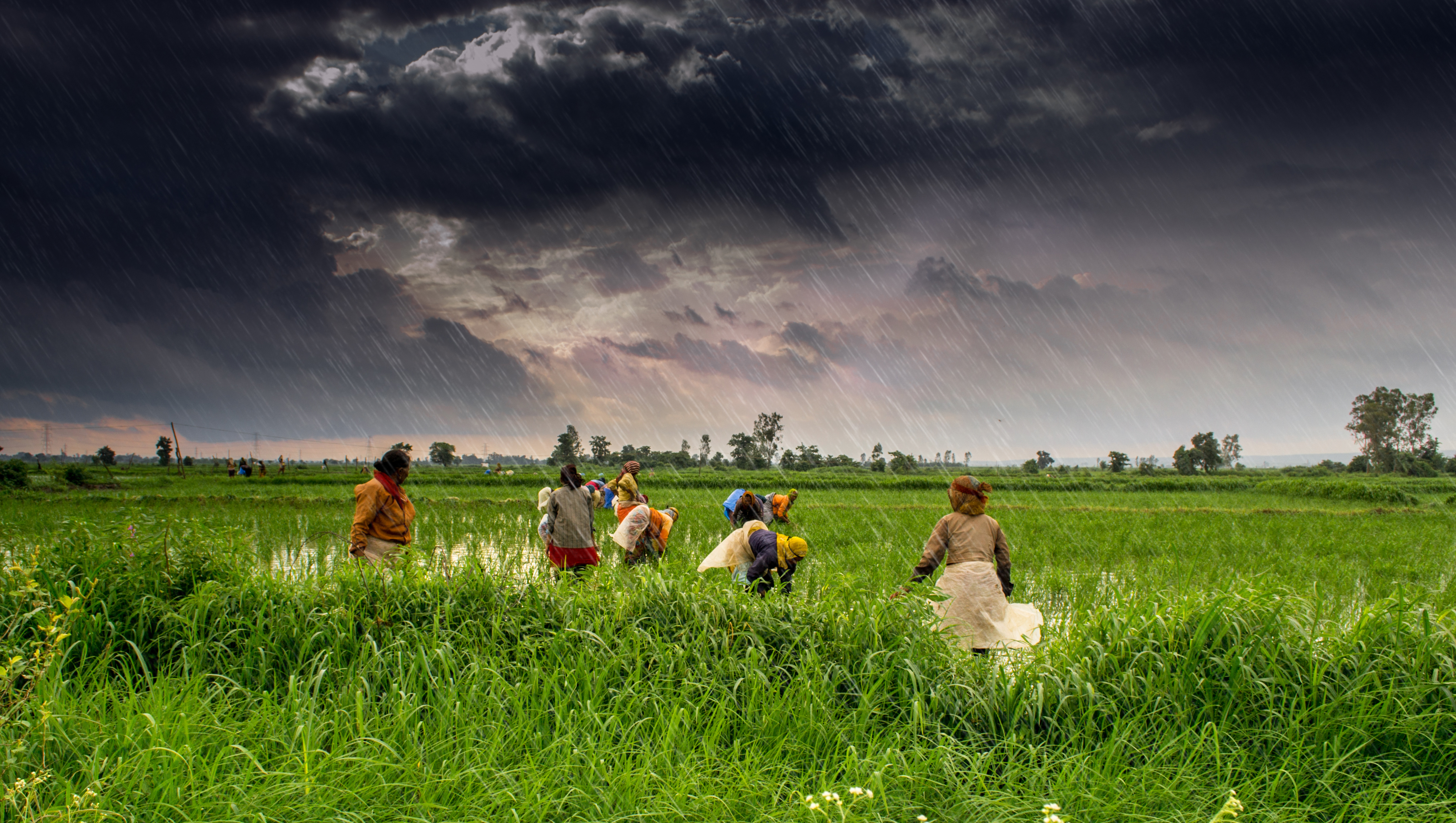 Explainer: India's Farm Laws Drive Wedge Between Farm Workers and Authorities