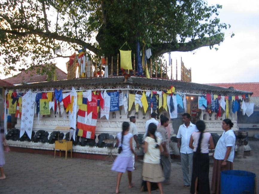 UN rights chief expresses alarm at Sri Lanka violence