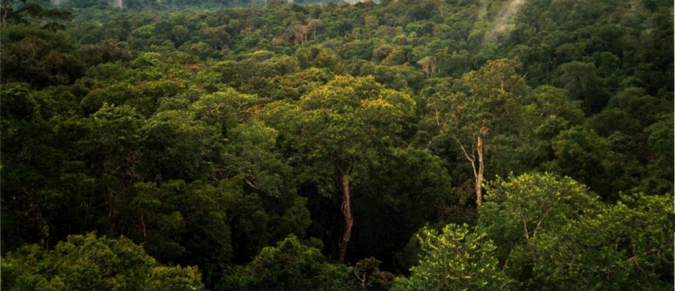 Report urges recognizing land rights of locals could be cost-effective protection for tropical forests
