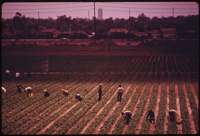 New Mexico rules exclusion of farm laborers from worker's compensation unconstitutional