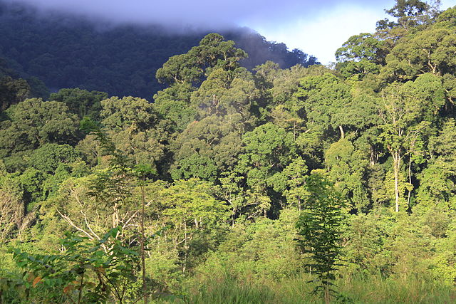 Indonesia court rejects attempt to protect tropical forests