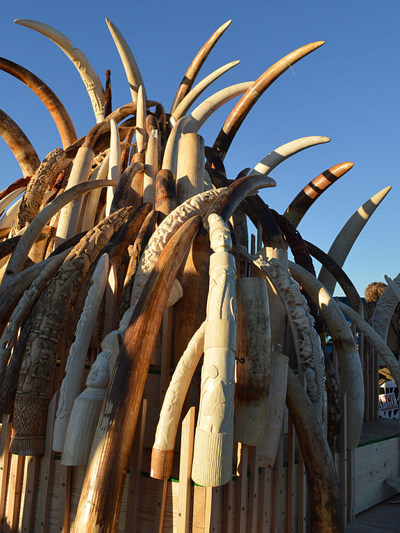 China announces plan to ban ivory trade by end of 2017