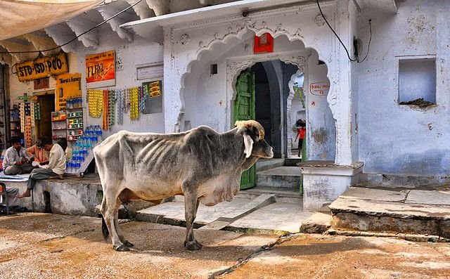 India state legislative assembly passes cattle preservation law