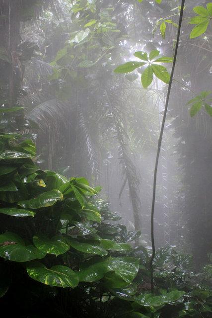 Brazil judge blocks order allowing mining in Amazon