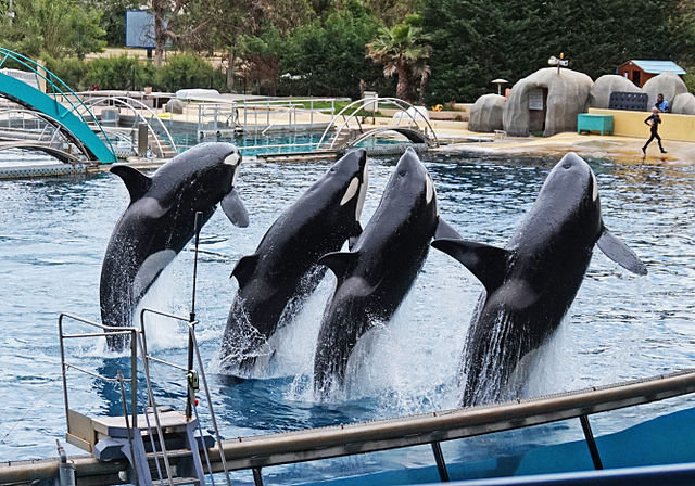 France court overturns ban on breeding whales in captivity