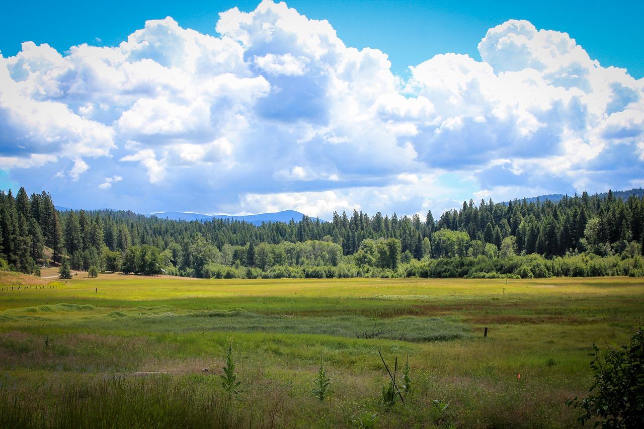 Trump pardons Oregon ranchers whose arrest lead to standoff
