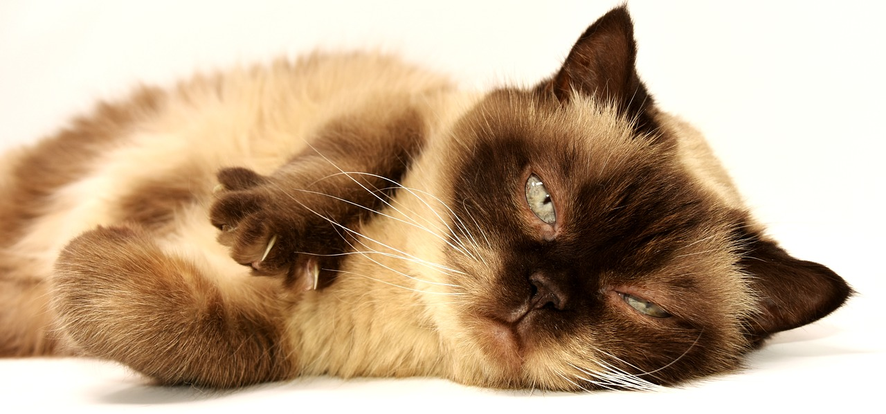 New York lawmakers vote to ban cat declawing