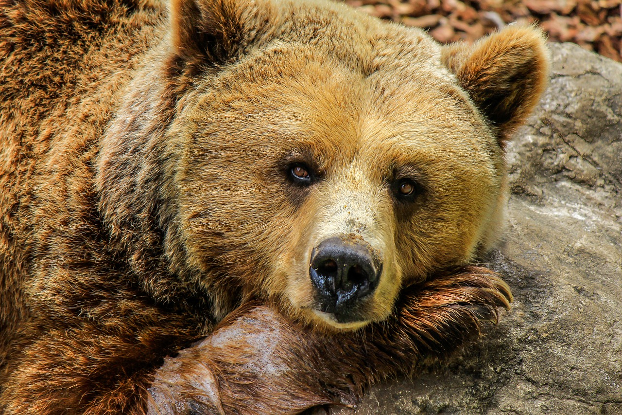 Ninth Circuit upholds protections for Yellowstone grizzly bears