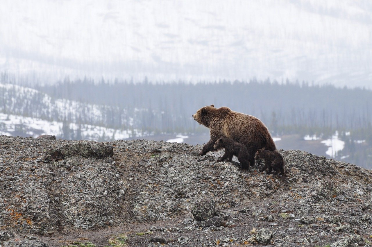 Department of Interior to allow drilling in Arctic National Wildlife Refuge