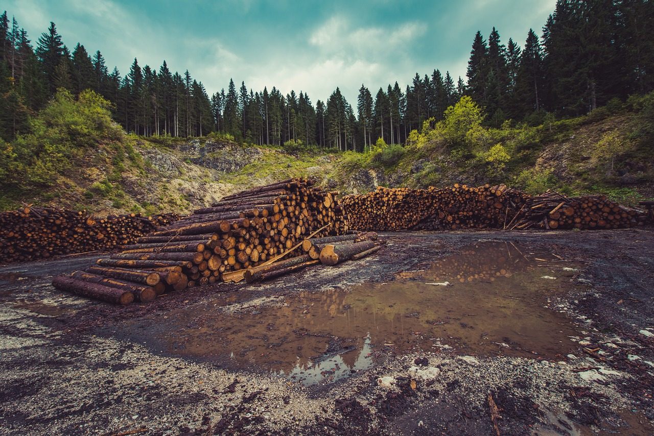 UK seeks to introduce law curbing supply chain deforestation