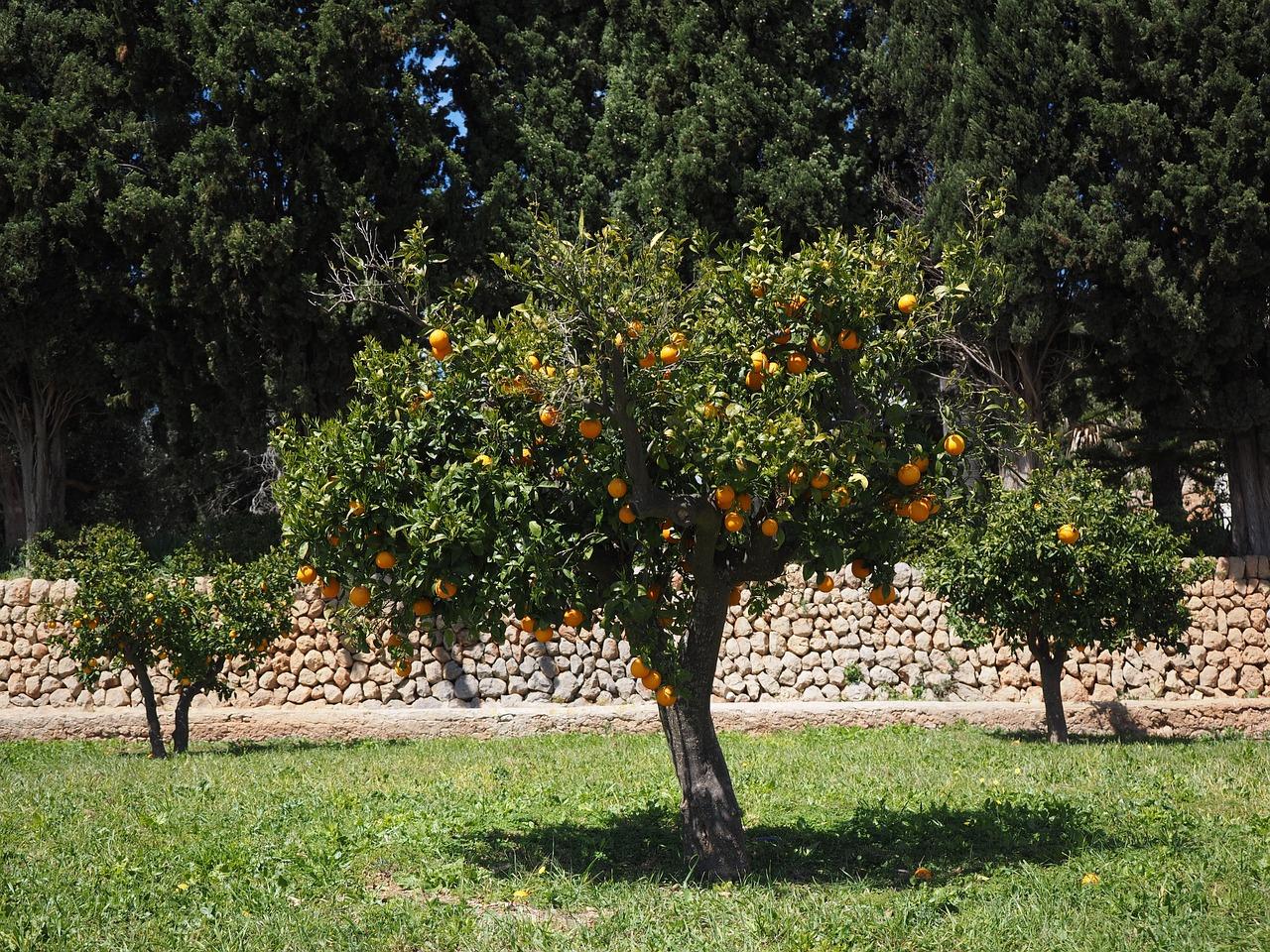 Supreme Court takes up California farmworkers union case