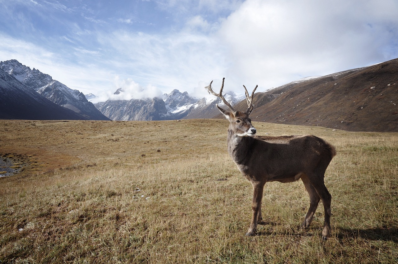 Norway Supreme Court rules for Sámi reindeer herders in wind power case